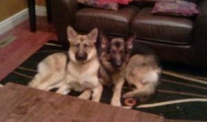 Nika and Sheeba