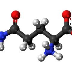 Glutamine for Bodybuilding, Appetite Suppressing & Sugar Cravings